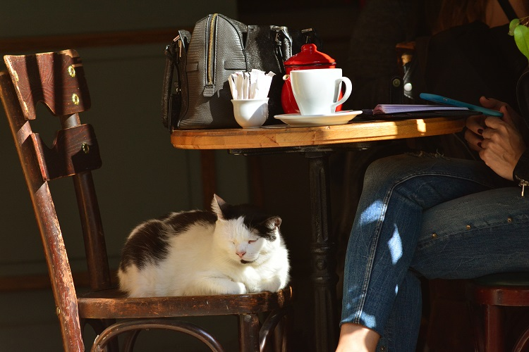 The cat sits on a chair in a cozy coffee house